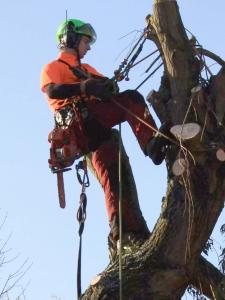 Veilig vellen van bomen